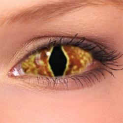 Hell Cat Sclera Contact Lenses (1 pair)